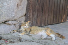 Yellow Cat - Behramkale, Assos, Aegean villages Royalty Free Stock Images