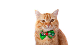 Yellow cat with christmas bow tie Stock Photos