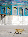 Yellow Cat at Dome of the Rock Mosque in Jerusalem Royalty Free Stock Photo