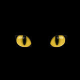 Yellow cat eyes. The yellow cat eyes on the black background Royalty Free Stock Images
