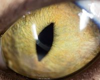 Yellow cat eyes. super macro. In the park in nature Stock Photo