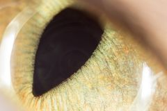 Yellow cat eyes. super macro. Photos in the studio Royalty Free Stock Images