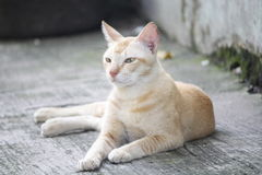 Yellow cat. This foto i take from outdoor Stock Photo