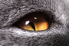 The yellow cat's eye Stock Photo