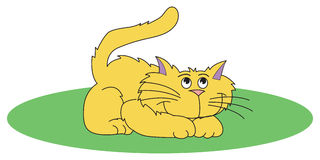 Yellow Cat. Vector of sitting cat on a white background Royalty Free Stock Photo