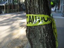 Yellow caution tape on a tree. Yellow caution tape wrapped around a tree trunk Stock Images