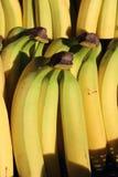 Yellow Cavendish Bananas Royalty Free Stock Images