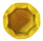 Yellow ceramic  plate Stock Photos
