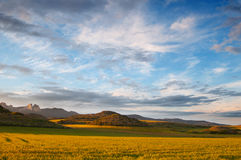 Yellow cereal fields at sunset. Beautiful light and sky Stock Images