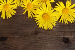 Yellow chamomile on wooden background Royalty Free Stock Images
