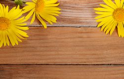 Yellow chamomile on wooden background Royalty Free Stock Photography