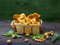 Yellow chanterelle in basket Stock Photo