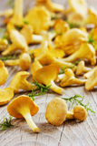 Yellow chanterelle (cantharellus cibarius) on a rustic background Royalty Free Stock Images