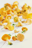 Yellow chanterelle (cantharellus cibarius) on a white wooden background Royalty Free Stock Photography