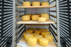 Yellow cheese on iron shelves Stock Photography