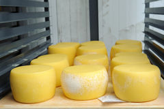 Yellow cheese on iron shelves Stock Images