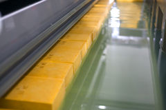 Yellow cheese production line for cheese factory.  Royalty Free Stock Image