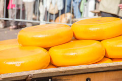 Yellow cheeses Stock Image