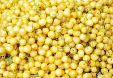 Yellow cherries background Royalty Free Stock Photos