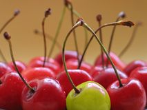 Yellow cherry Royalty Free Stock Image