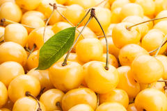 Yellow cherry Stock Photography