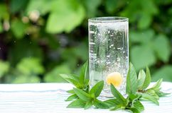 Yellow cherry in a glass with water, bubbles. Around mint leaves. Summer Drink Stock Image