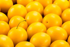 Yellow cherry plums Stock Images