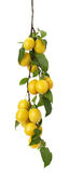 Yellow cherry plums on the white background Stock Photography
