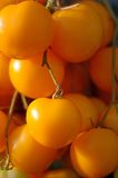 Yellow cherry tomato Stock Image