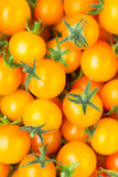 Yellow cherry tomato background Stock Photography