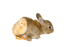 Yellow chick and bunny stock photography