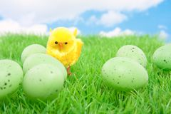 A yellow chick with easter eggs Stock Images