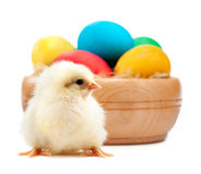 Yellow chick with easter eggs. isolated Stock Images
