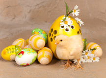 Yellow chick and easter eggs Stock Image