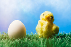 Yellow chick on grass and egg, blue background Stock Photo