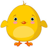 Yellow Chick Stock Images