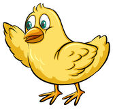 Yellow chick Royalty Free Stock Photography