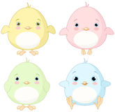 Yellow Chick Set. Illustration of very cute chick set vector illustration