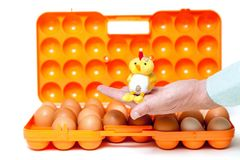 Yellow chick sitting on his hands over container with eggs. Yellow toy chicken sitting in the palm of an open plastic container for transporting eggs Stock Image