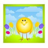Yellow Chick Tulips and Spring Sky Royalty Free Stock Image
