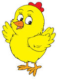 Yellow chick (vector clip-art) Stock Images