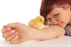 Yellow chick and young girl. Little two days old easter chick sitting on the arm of a teenager girl Royalty Free Stock Photography