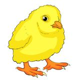 The is yellow chicken baby. vector illustration Royalty Free Stock Photo