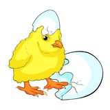 The is yellow chicken baby. vector illustration. Yellow chicken baby hatched from an egg. vector illustration Stock Photography