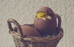Yellow chicken in an egg Royalty Free Stock Images