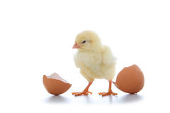 Yellow chicken and eggs Royalty Free Stock Photos