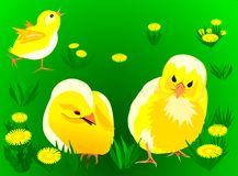 Yellow chickens. Three yellow chickens on the grass.Easter design royalty free illustration
