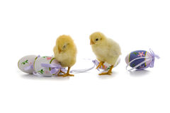 Yellow chickens and easter eggs Stock Image