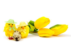 Yellow chickens with eggs and tulips Stock Photo