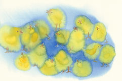 Yellow chickens watercolor blue background Royalty Free Stock Images
